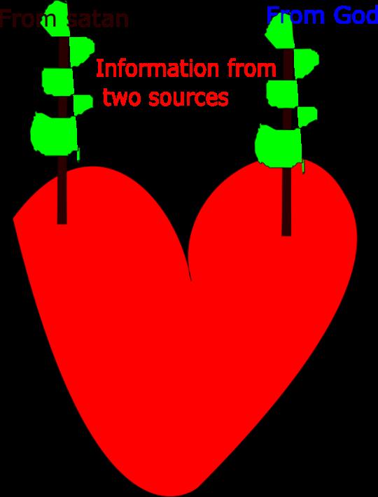 Heart main